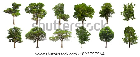 isolated tree green set is located on a white background. Collection of isolated tree green on white background Tropical tree Royalty-Free Stock Photo #1893757564