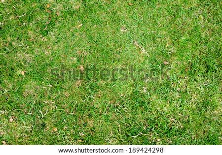 Green grass texture background   #189424298