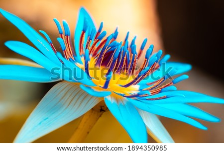 Beautiful water lily flowers close up macro photo, great detailed shot, bokeh background, vivid saturated colors on the flower petals, pollen and great scent attracts insects and bugs,  Royalty-Free Stock Photo #1894350985