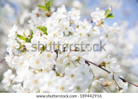 Spring. Tree in blossoming #189442916