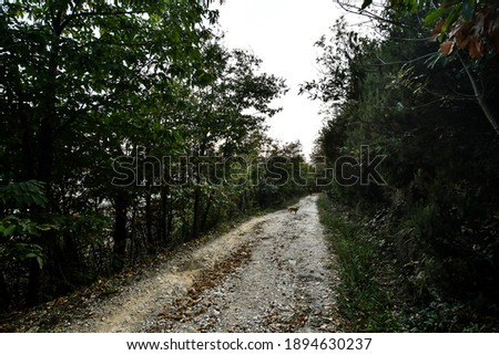 road in the forest, beautiful photo digital picture