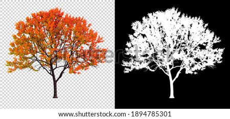 autumn season, change color leaves on transparent background with clipping path and alphha channel, 3d illustration rendering