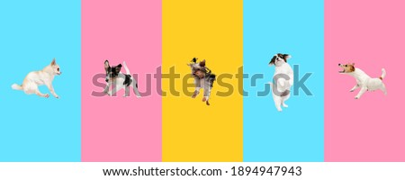Creative collage of five different breeds of dogs. Flyer for ad. Royalty-Free Stock Photo #1894947943