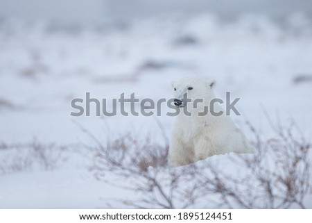 Beautiful Wildlife Photography in High Definition