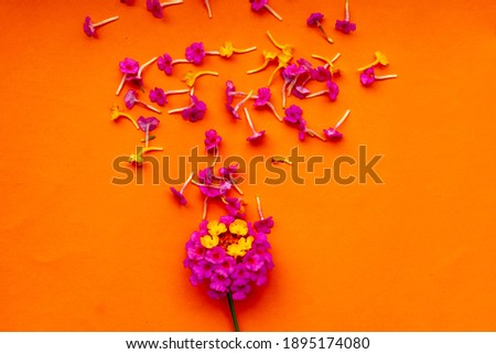 Find lantana flower petals. Top view with copy space images in HD and millions of other royalty-free Flowers frame on orange background  on orange background.