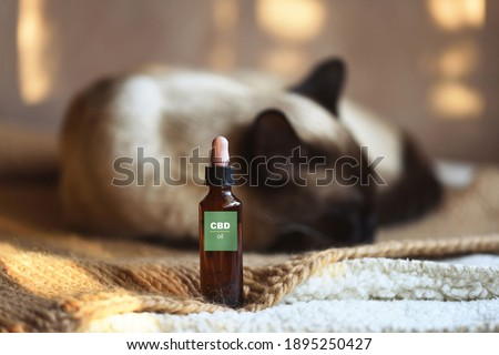 Canister of CBD hemp oil for domestic cat, selective focus Royalty-Free Stock Photo #1895250427