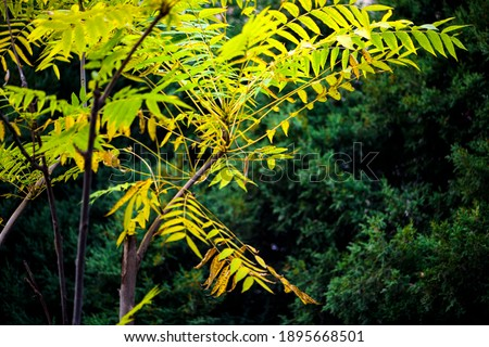 In autumn, green Toon Leaves against a black background Royalty-Free Stock Photo #1895668501