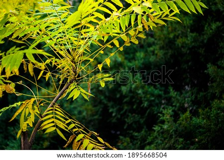 In autumn, green Toon Leaves against a black background Royalty-Free Stock Photo #1895668504