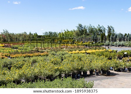 Ornamental trees and shrubs in pots for sale in the summer nursery center against a blue sky Royalty-Free Stock Photo #1895938375