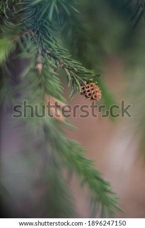 Blurred background with fir branches and a small pine cone. Beautiful defocused coniferous forest texture. Soft light, bokeh. Royalty-Free Stock Photo #1896247150
