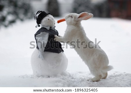 The rabbit stands on its hind legs in winter on the white snow and eats a carrot. Snowman in clothes on the street. An animal white rabbit stands next to a snowman.