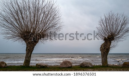 Two leafless trees with spectacular branches in early spring  on the baltic sea coast in Mecklenburg Western-Pomerania Royalty-Free Stock Photo #1896376501