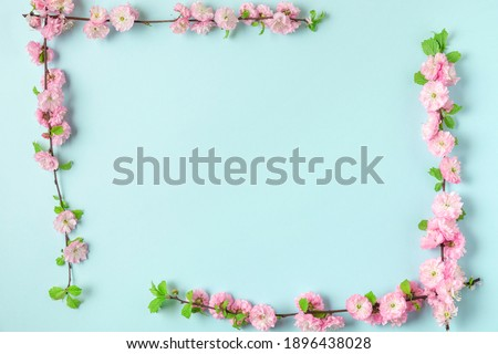 Frame made of spring pink cherry blossom branches on blue background. Flat lay. Top view. Holiday or wedding layout with copy space Royalty-Free Stock Photo #1896438028