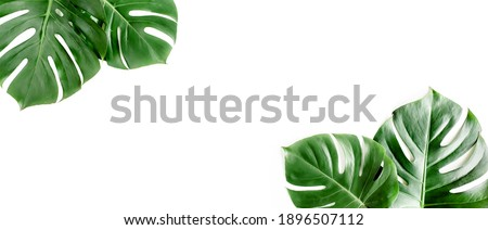 Banner of green tropical palm leaves Monstera on white background. Flat lay, top view. Royalty-Free Stock Photo #1896507112