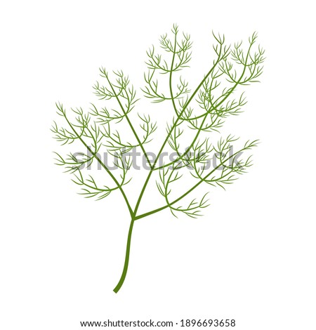 Green fresh brunch of dill isolated on white background stock vector illustration. Flat style, colorful ingredient, herbal garnish. Royalty-Free Stock Photo #1896693658
