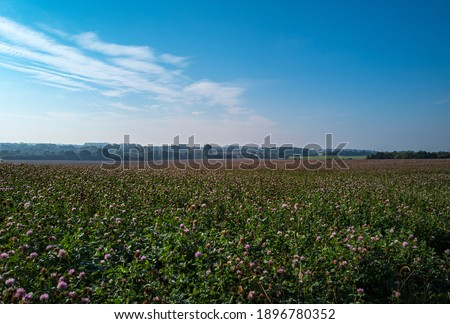 an extensive arable land in Mecklenburg western Pomerania with blooming clover and blue sky Royalty-Free Stock Photo #1896780352