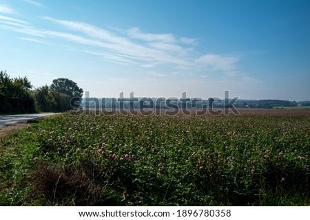 an extensive arable land in Mecklenburg western Pomerania with blooming clover and blue sky Royalty-Free Stock Photo #1896780358