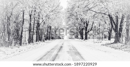 Black and white panorama of icy road with frost covered trees Royalty-Free Stock Photo #1897220929