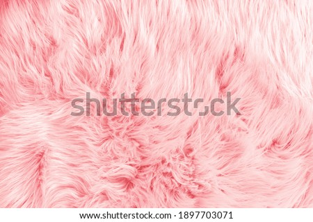 Light pink long fiber soft fur. Pink fur for background or texture. Fuzzy pink fur plaid. Shaggy blanket background. Fluffy fake textile fur. Flat lay, top view, copy space Royalty-Free Stock Photo #1897703071