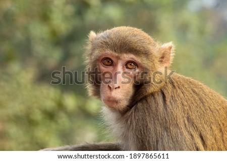 Closeup Of A Monkey At A Temple In India Stock Photo