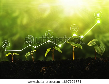 Young  plants growing at sunlight with increase graph and icons energy sources for renewable. Sustainable development. Environment and ecology concept.  Royalty-Free Stock Photo #1897971871