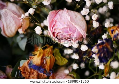 Macro shot of decaying pink rose amongst the white gypsophila Royalty-Free Stock Photo #1898071360