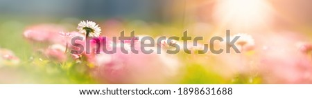 Meadow with lots of white and pink spring daisy flowers and yellow dandelions in sunny day. Nature floral background in early summer with fresh green grass Royalty-Free Stock Photo #1898631688