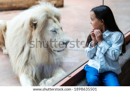 Little Girl Watching Through the Glass at White Lion in Zoo. Activity Learning for Kid. Royalty-Free Stock Photo #1898635501