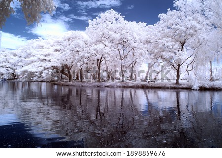 Infrared photography Lumphini Park, White trees, Outdoor