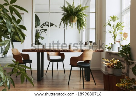 Stylish and botany interior of dining room with design craft wooden table, chairs, a lof of plants, big window, poster map and elegant accessories in modern home decor. Template. Royalty-Free Stock Photo #1899080716