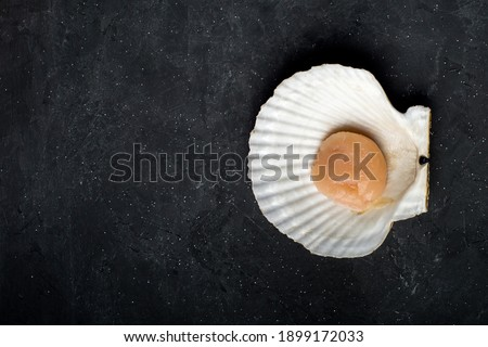 A scallop in a shell. On a black background. Top view. Close up. High quality photo