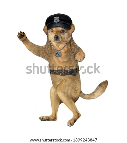 A beige dog policeman is wearing in a black hat and a police badge around his neck. White background. Isolated.
