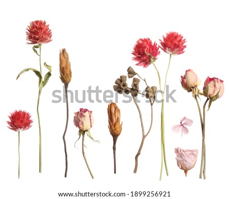 Set with beautiful dry flowers on white background  Royalty-Free Stock Photo #1899256921