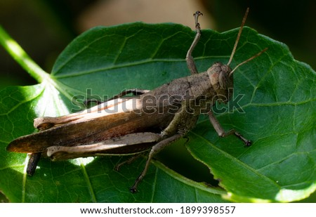 grasshoppers make up a group of different insects.