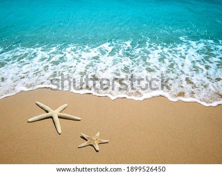 Starfish on a beach sand Royalty-Free Stock Photo #1899526450