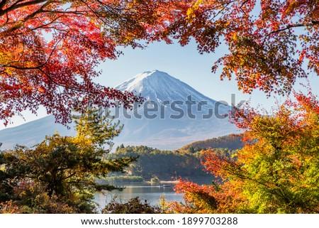 Fuji Mountain and Red Maple Leaves in Autumn at Kawaguchiko Lake, Japan