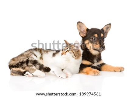 small puppy dog and kitten lying together. isolated on white background #189974561