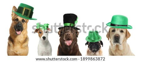 Cute dogs with leprechaun hats on white background, banner design. St. Patrick's Day Royalty-Free Stock Photo #1899863872