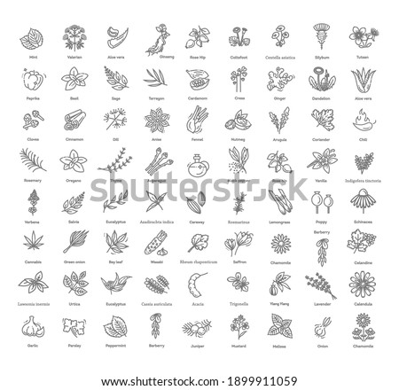 Condiment and herbs icons set. Outline set of condiment vector icons Royalty-Free Stock Photo #1899911059
