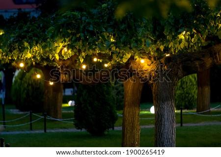 illumination garden light with electric garland of warm light bulbs on tree branches, dark illuminate evening scene of outdoors park nobody. Royalty-Free Stock Photo #1900265419