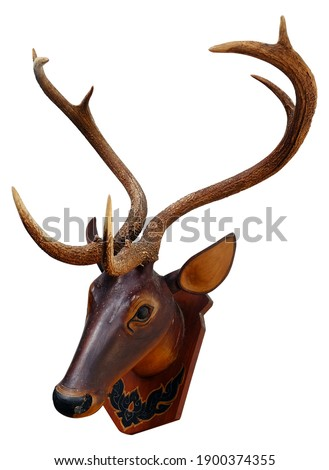 Deer Antlers on Wooden Head on white background, Asian Deer Antler, Cervus eldi Royalty-Free Stock Photo #1900374355