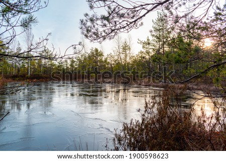 Small frozen lake surrounded with trees during winter in the Cenas swamp in Latvia