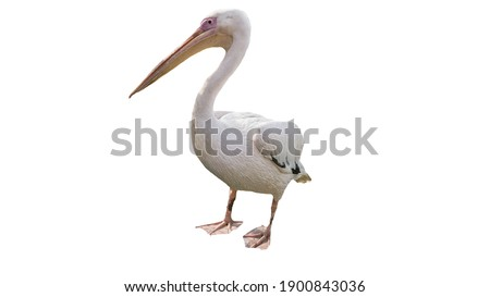 Pelican on a white background, beautiful bird, pelican is isolated Royalty-Free Stock Photo #1900843036