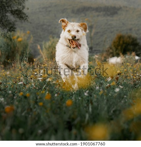 Pics of dogs playing in the grass