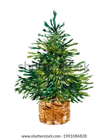 Watercolor green Christmas tree in a wicker basket. Scandinavian spruce in rustic style. Watercolor botanical hand drawn illustration.