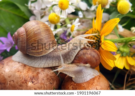 grape snail crawling over mushrooms against a background of flowers. mollusc and invertebrate Royalty-Free Stock Photo #1901196067