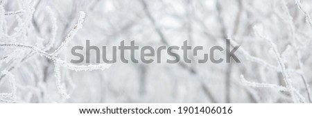 Snow and rime ice on the branches of bushes. Beautiful winter background with trees covered with hoarfrost. Plants in the park are covered with hoar frost. Cold snowy weather. Cool frosting texture. Royalty-Free Stock Photo #1901406016