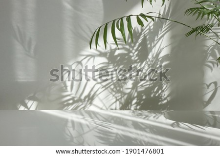 Fresh natural branches of evergreen tropical palm plant with decorative shadows on a light wall and glossy table surface. Game of shadows on a wall from window at the sunny day. Royalty-Free Stock Photo #1901476801