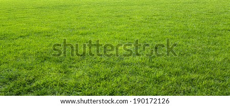 Green meadow grass field for football  #190172126