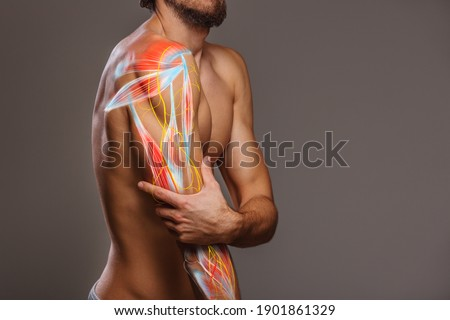 Arm nerve pain, man holding painful zone injured point, human body anatomy Royalty-Free Stock Photo #1901861329